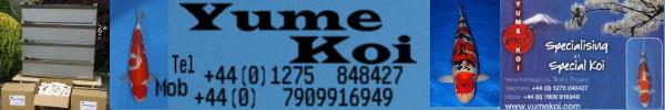 Yume Koi