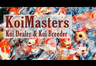 Koi Masters Yorkshire