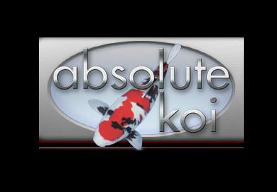 Absolute Koi