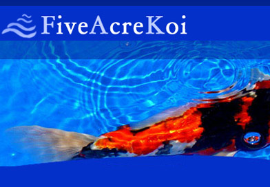 Five Acre Koi